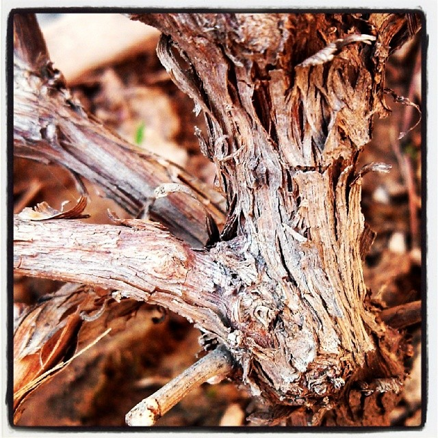 dry branch images