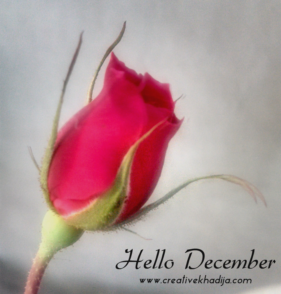 December flower photography