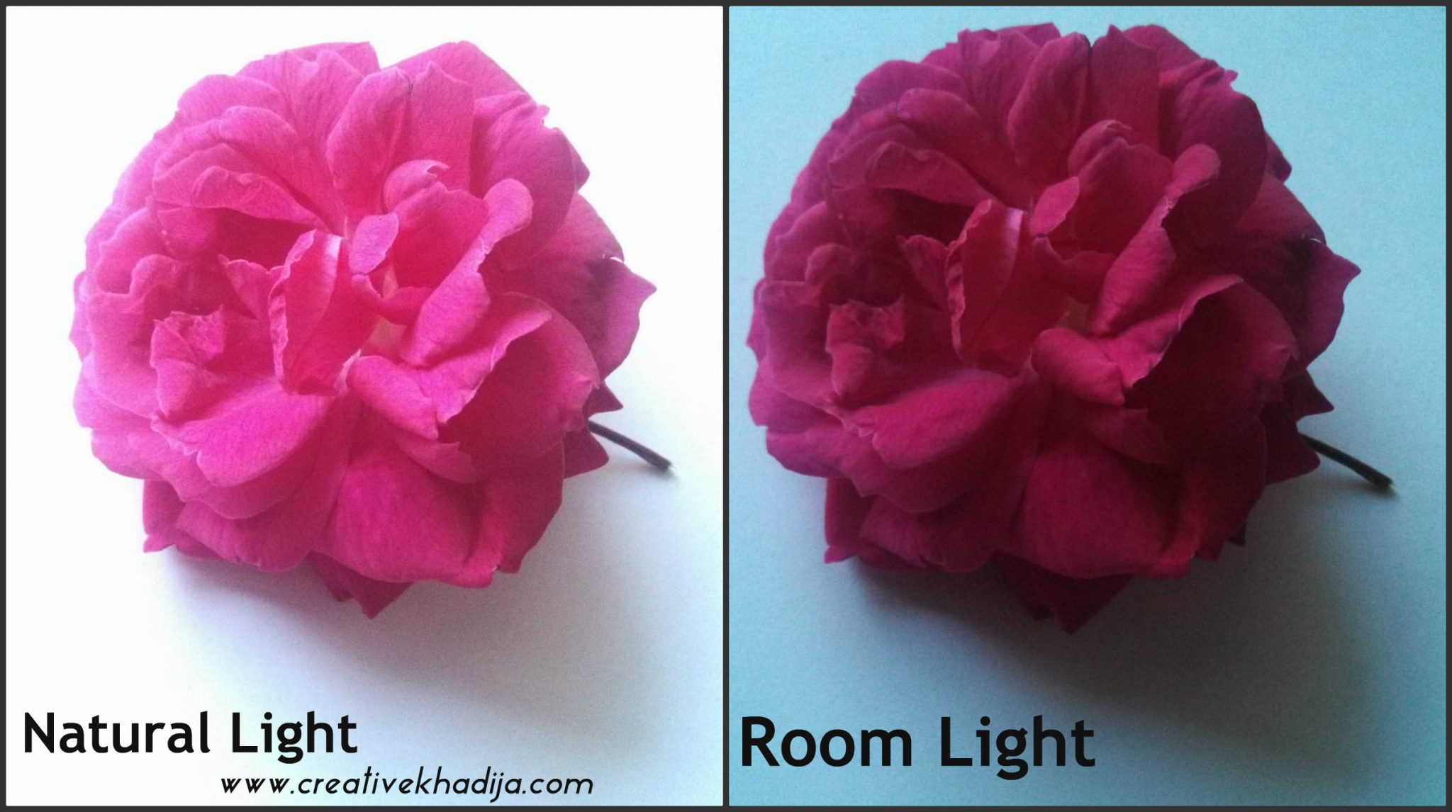 photography tips tricks and ideas