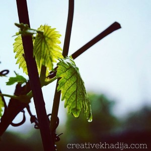 Spring Is Here-Enjoy Fresh Buds and Nature Clicks