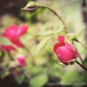 instagram spring flowers photography