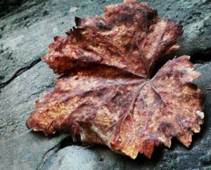 fall-leaves-photography-creative-khadija