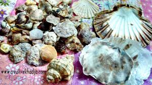 shells from cadiz beach shells in pakistan