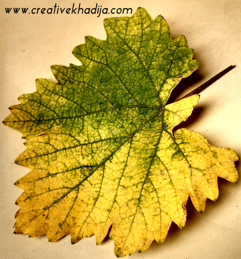 nature images leaf