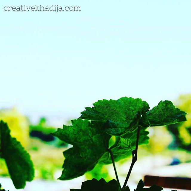 creative-khadija-photography-spring