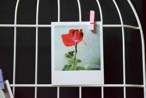 bird-cage-wall-frame-organizer-for-polaroid-prints-hanging-blog-creative-khadija-photography