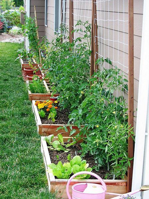 home renovation ideas have a kitchen garden
