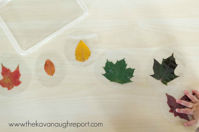 rainbow leaf sorting