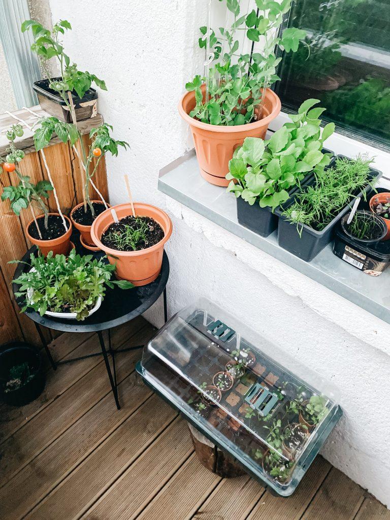 creative indoor activities for grownups garden