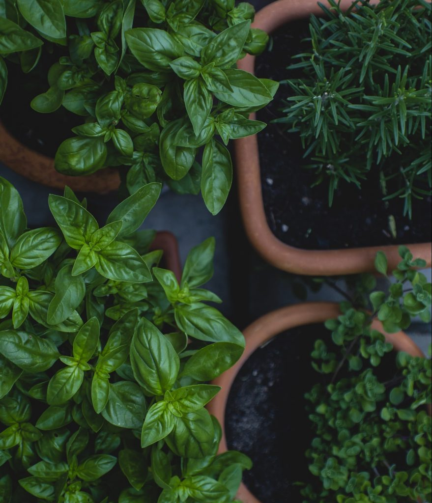 tips for gardening growing vegetables
