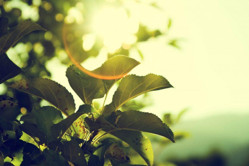 tips for gardening maximum sunlight
