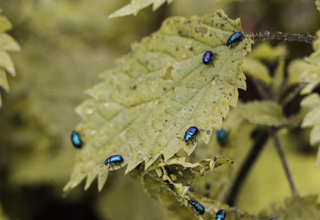 tips for gardening beware of infestations